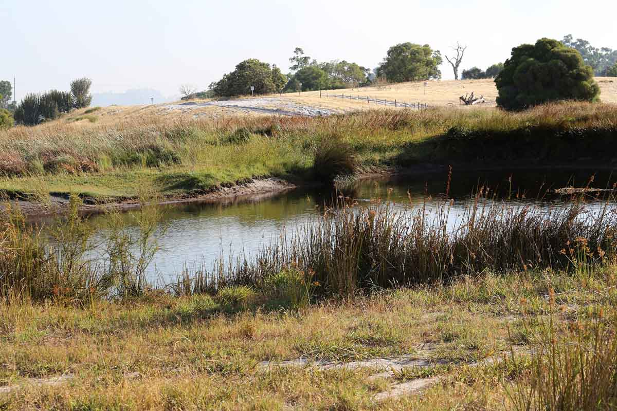A small dam used for refilling firefighting helicopters at Whiteman Park – Sun 19 January 2014. Photo © Matt Hayes