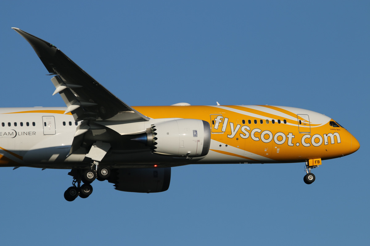 9V-OFB Boeing 787-8 Dreamliner (MSN 37118/335) named 'Lickity-Split', of Scoot, at Perth Airport – Thu 17 September 2015. First visit to Perth, flight TZ008 from Singapore, on final approach to runway 21 at 5:06 pm. Normally the larger 787-9 Dreamliners are used on this service, but 9V-OJA is reportedly out of service temporarily, and the spare 777-200ER 9V-OTC was unavailable, so this aircraft was used instead. 9V-OFB was delivered on 31 August 2015, a couple of weeks before this photo. Photo © David Eyre