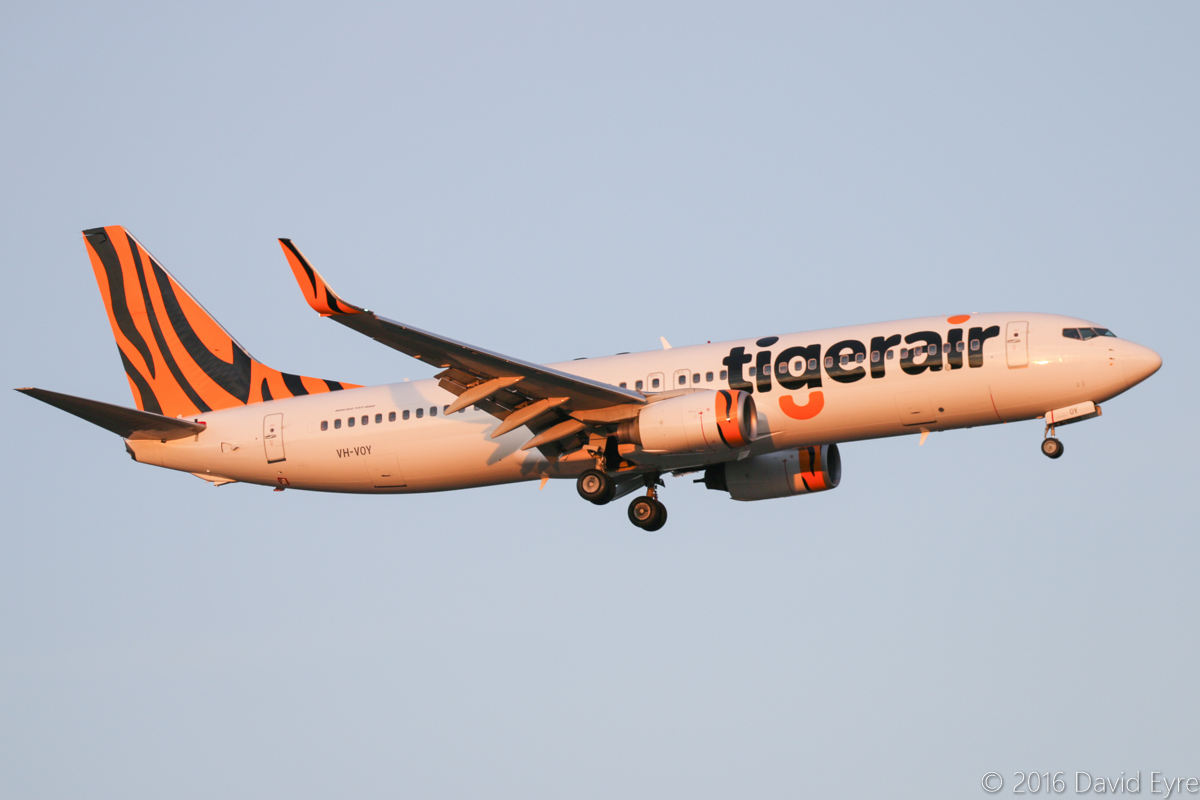 VH-VOY Boeing 737-8FE (MSN 33996/1551) of Tigerair Australia, at Perth Airport – Sun 3 April 2016. Flight TT18 from Denpasar (Bali), on final approach to runway 21 at 6:00pm. Originally delivered to Pacific Blue as ZK-PBD in 2004, it was transferred to Virgin Australia in 2015. During 7-14 March 2016, it was repainted in Tigerair Australia livery and started operating Bali flights in place of parent company Virgin Australia. Photo © David Eyre