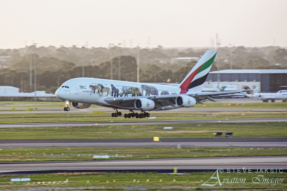 A6-EEQ Airbus A380-861 (MSN 141) of Emirates, wearing 'United for Wildlife' livery, at Perth Airport – Fri 29 April 2016. First visit to Perth wearing this special livery, in support of United for Wildlife, a global collaboration that unites the efforts of the world's leading wildlife charities in the fight against the illegal wildlife trade. Flight EK420 from Dubai, landing on runway 21 at 5:27pm. Photo © Steve Jaksic