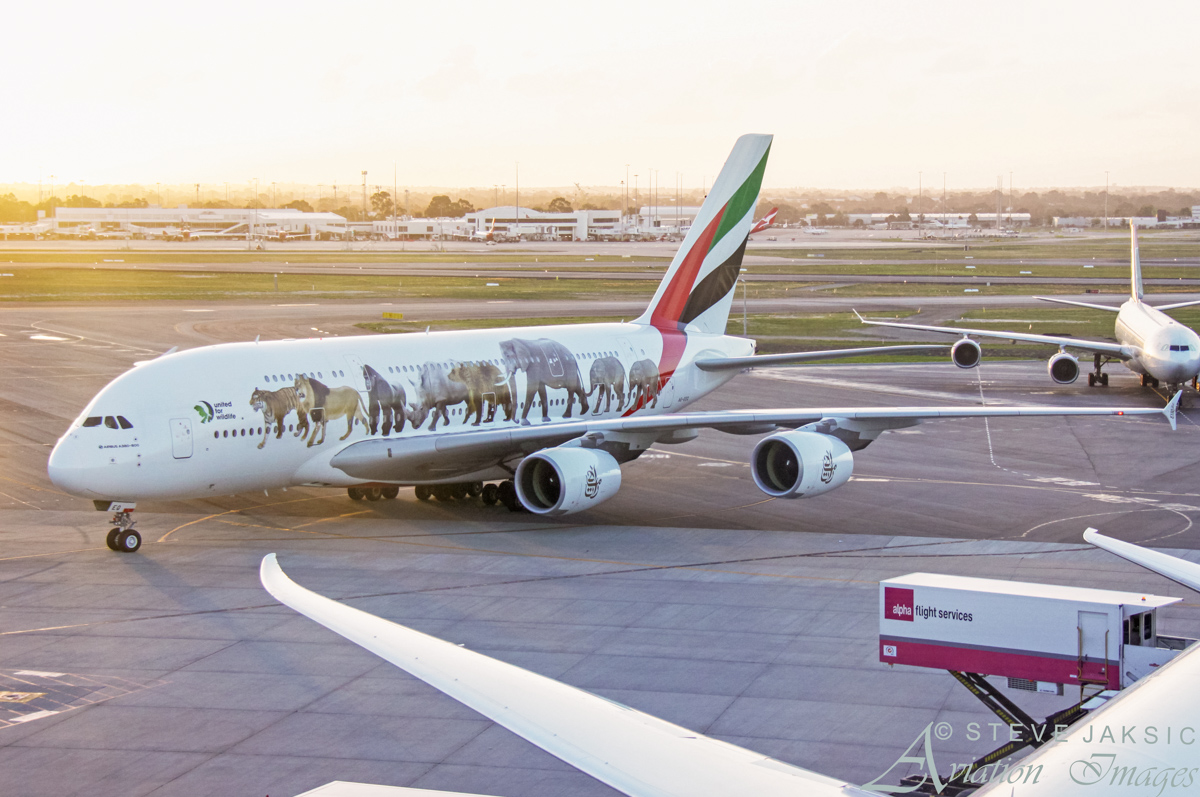 A6-EEQ Airbus A380-861 (MSN 141) of Emirates, wearing 'United for Wildlife' livery, at Perth Airport – Fri 29 April 2016. First visit to Perth wearing this special livery, in support of United for Wildlife, a global collaboration that unites the efforts of the world's leading wildlife charities in the fight against the illegal wildlife trade. Flight EK420 from Dubai, taxying in to park at Bay 151 at 5:32pm. Photo © Steve Jaksic
